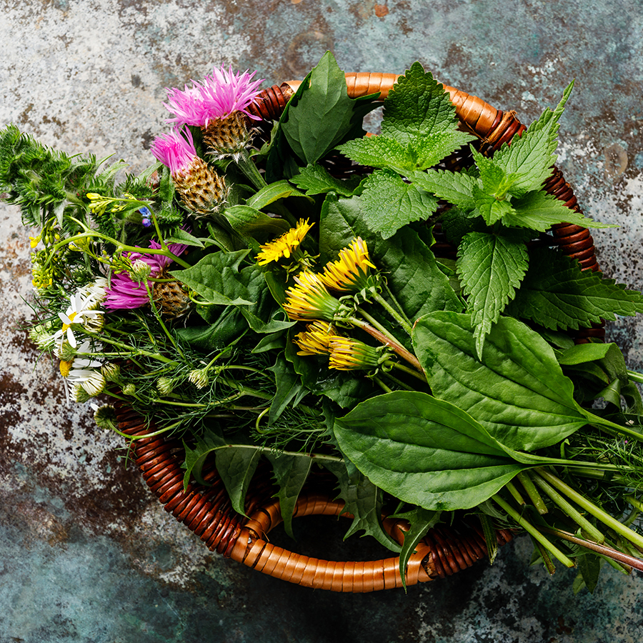 Liver Cleansing Herbs