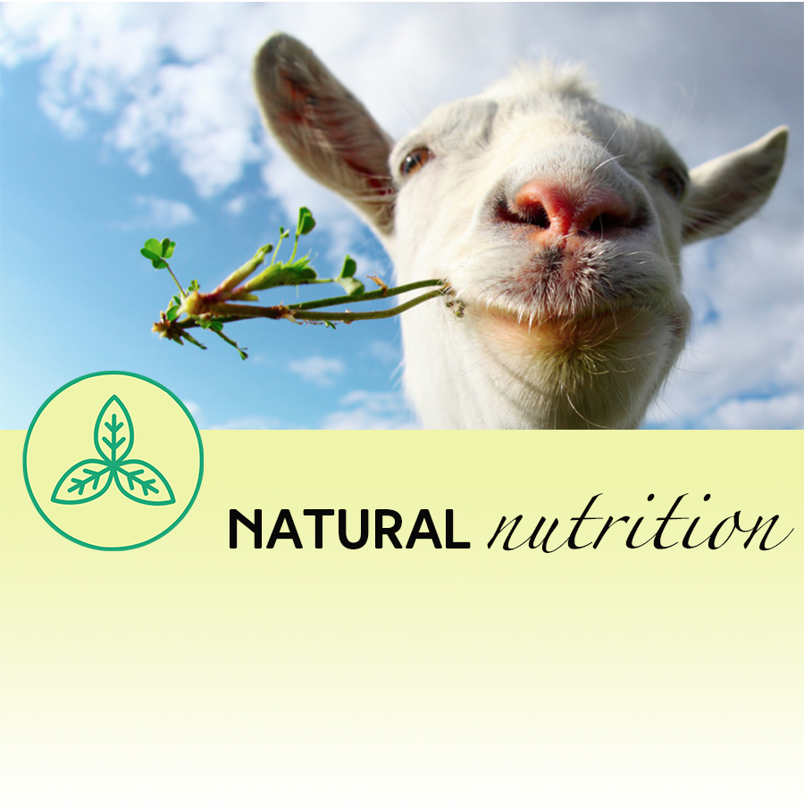 Goat's Milk is Good for You!