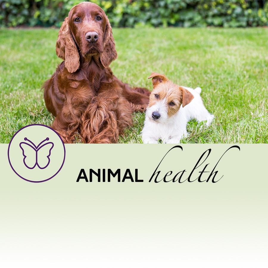 Allergic Pet Epidemic