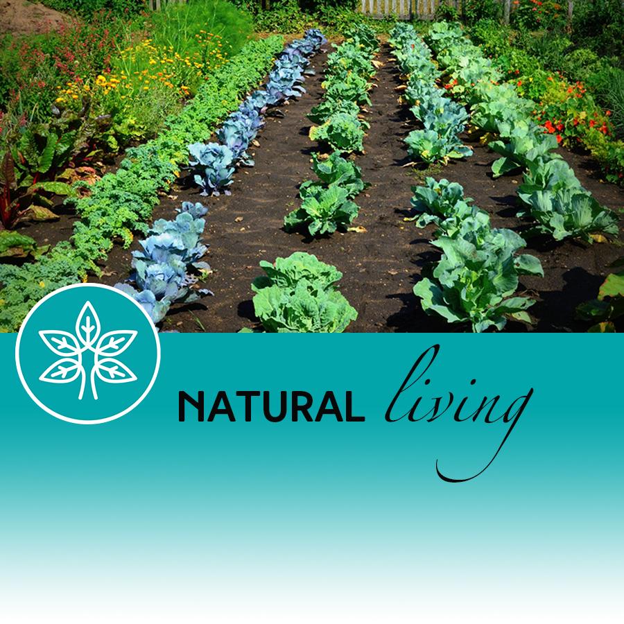 Planning a Herb Garden