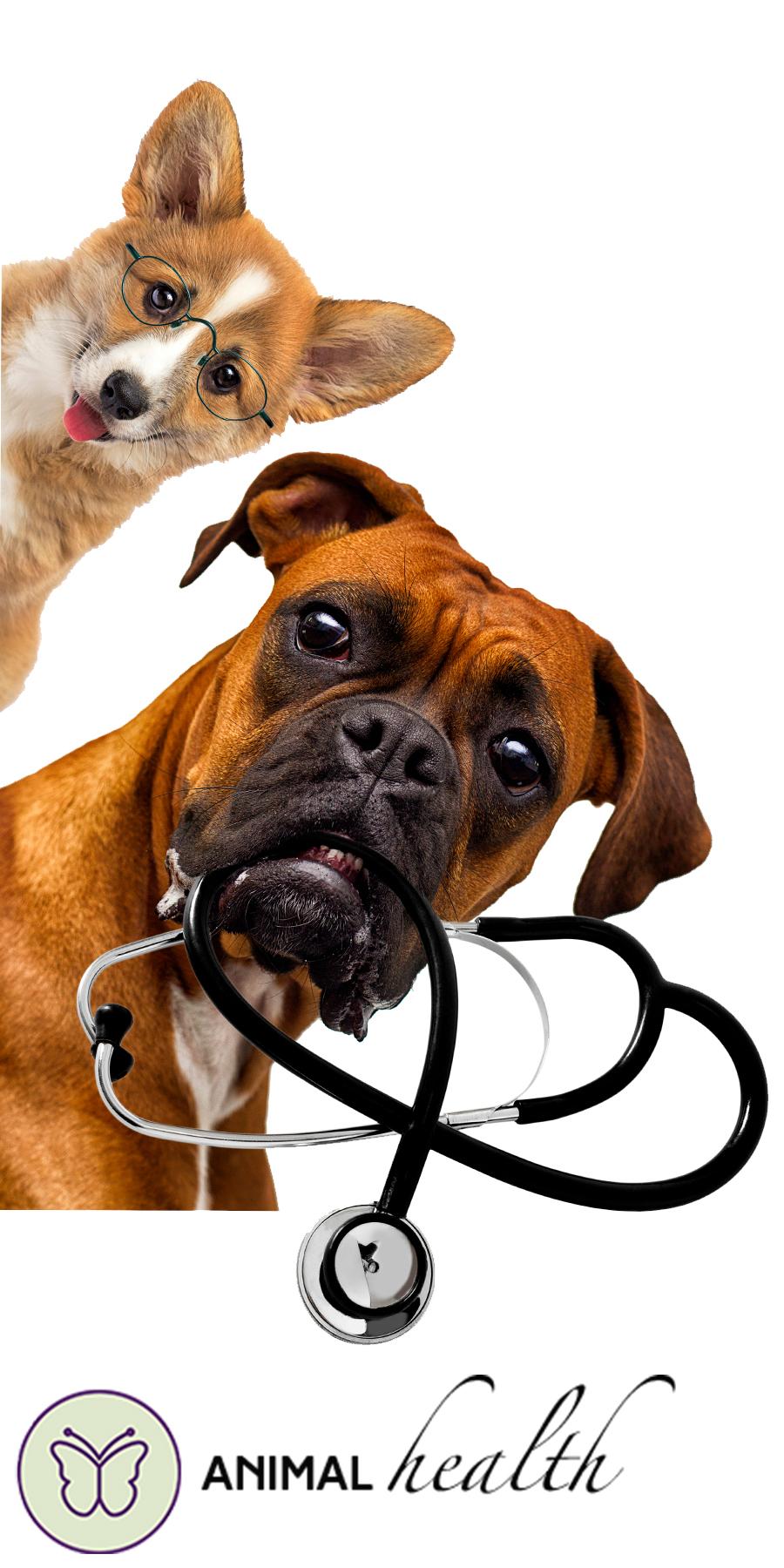 seizure dog