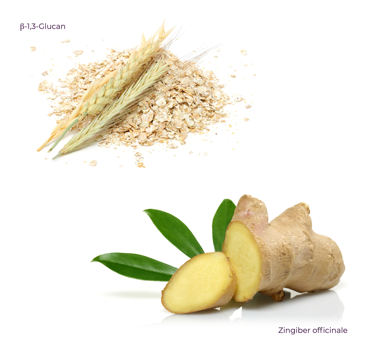 ginger beta glucan