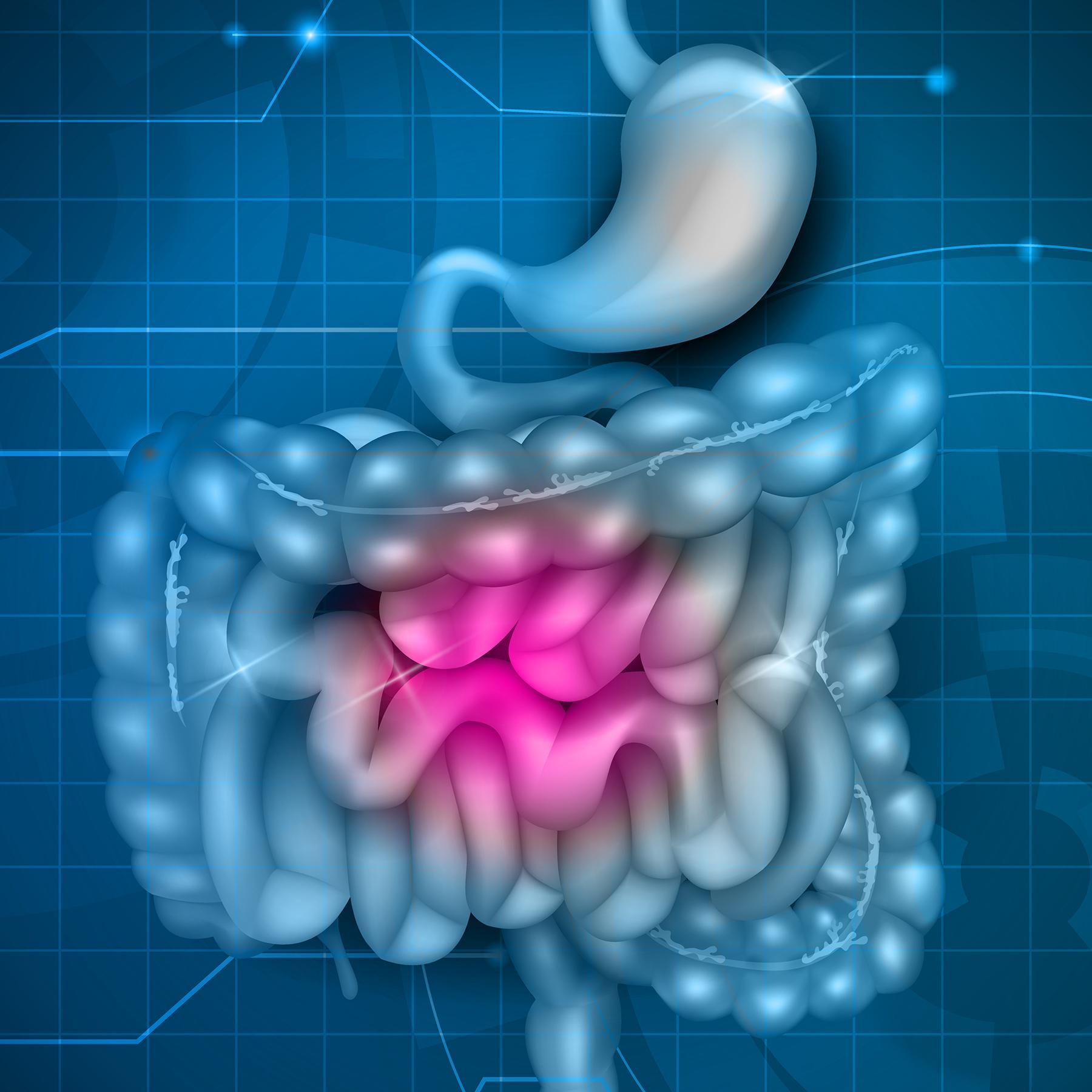 intestines gut
