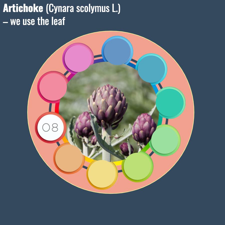 Cynara scolymus L.